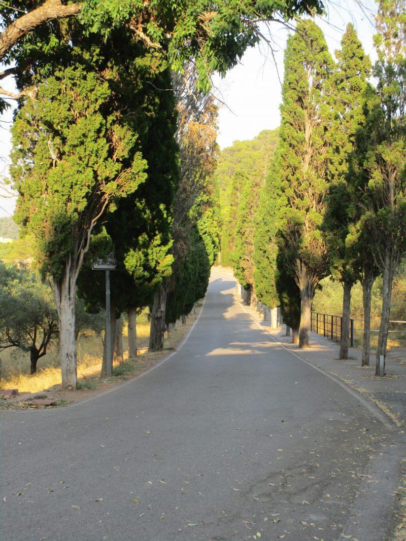 Avenida de Cipreses